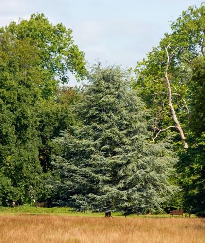 写真中央がモミの木です。